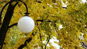 Lantern on a background of autumn leaves. Lantern on a background of autumn yellow leaves stock footage