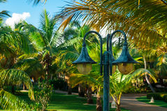 Lantern on the background of palm trees. The lantern on the background of the sunny palm alley Stock Image