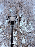 Lantern and birdhouse Stock Photography