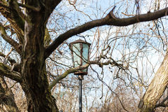 Lantern between branches in sunny spring day Stock Photos