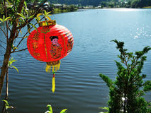 Lantern chinese hanging on branch. Stock Image