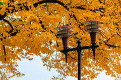 Lantern in a city park close-up on a foliage background Royalty Free Stock Images