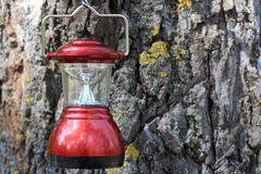 Lantern on cortex tree background Stock Image