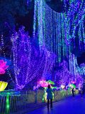 Lantern Festival In Zigong, China Royalty Free Stock Images