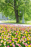 Lantern and a flower bed with tulips, St.-Petersburg, Russia Royalty Free Stock Photography