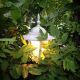 Lantern Glow. The glow of a lantern in the leaves Royalty Free Stock Images
