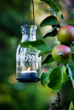 Lantern hanging from appletree Royalty Free Stock Photo