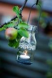 Lantern hanging from appletree. Beautiful glass lantern hanging from apple tree Royalty Free Stock Photography