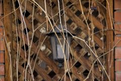 Lantern hanging on the wall of the arbor. Arbor entwined with stems of grapes without leaves royalty free stock image