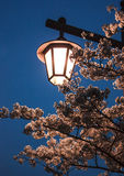 Lantern illuminates the flower branches Stock Image