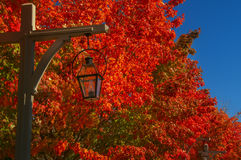 "Lantern lamp on natural background autumn red ""burning"" leaves Royalty Free Stock Image"