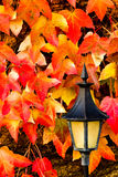 Lantern With Leaves Royalty Free Stock Photo