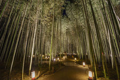 Lantern and light festival in Arashiyama area Stock Images