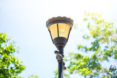 Lantern lighting in the park Royalty Free Stock Images