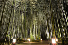 Lantern lights on a pathway in a bamboo grove during Arashiyama Hanatouro festival in Japan. Peaceful path through a forest of bamboo illuminated by the soft stock photography