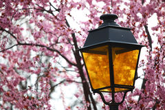 Lantern in lilac Stock Photo
