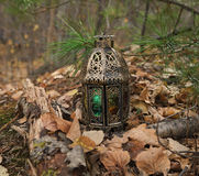 Lantern with magic light in the forest Stock Photo