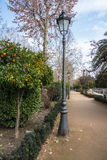 A lantern and an orange tree at the park of Granada. Andalusia, Spain Stock Photo