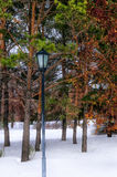 Lantern in the park. Trees on the embankment covered with snow Royalty Free Stock Images
