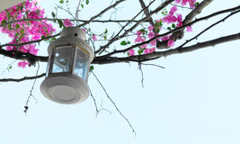Lantern with pink flowers against a blue sky Royalty Free Stock Photography