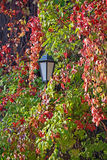Lantern among the red and green leaves. Royalty Free Stock Photo