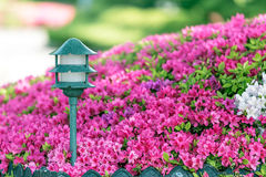 Lantern in sakura garden on sunshine day. The lantern in sakura garden on sunshine day royalty free stock photo