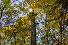 The lantern shines in the foliage of trees. LED flashlight shines in the foliage of trees in the park Stock Image