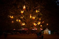 Free Lantern Tree Royalty Free Stock Photos - 137434538
