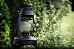 Lantern on a tree branch Royalty Free Stock Images