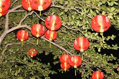 Lantern on the tree. Lantern decoration in new year Stock Photography
