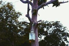Lantern on a tree royalty free stock photos