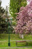 Lantern, wooden bench and cherry blossom. In citypark. beautiful spring background Royalty Free Stock Photos