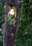 Lantern wooden pole Stock Image