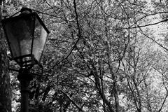 Lantern in the woods Stock Photography