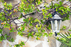 Lanterna bianca fotografia stock libera da diritti