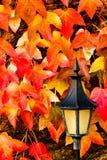 Lanterna com folhas Foto de Stock Royalty Free