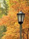 Lanterna de encontro às árvores do amarelo do outono. Fotografia de Stock