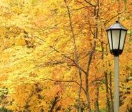 Lanterna de encontro às árvores do amarelo do outono. Fotos de Stock