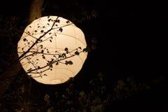 Lanterna de papel de arroz Foto de Stock Royalty Free