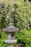 Lanterna de pedra japonesa sob árvores da flor de cerejeira de Sakura Fotos de Stock Royalty Free