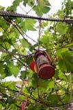 Lanterna della candela che pende dal ramo di albero immagini stock