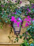 Lanterna della via circondata dai fiori rosa della buganvillea fotografie stock libere da diritti