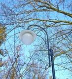 Lanterna della via fra gli alberi Fotografia Stock Libera da Diritti
