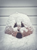 Lanterna di grido di Jack O coperta in neve Immagine Stock Libera da Diritti