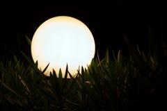 Lanterna di notte in un'erba Fotografia Stock Libera da Diritti