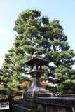 Lanterna di pietra del fondo del pino e di stile giapponese nel Giappone immagine stock libera da diritti