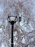 Lanterna e aviario Fotografia Stock