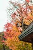 Lanterna e fundo colorido do outono Fotos de Stock Royalty Free