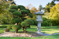 Lanterna ed alberi di pietra in giardino giapponese Immagine Stock