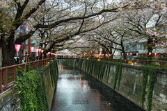 Lanterna em Sakura Festival em Japão A lanterna lê a luz do deus Fotos de Stock